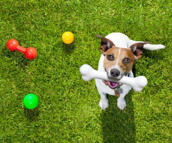 Sublime Pet Spa Doggy Daycare